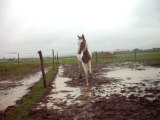 Fiona qui trotte sous la pluie