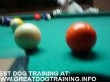 Dog training - pool playing dog!