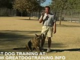 Dog training - How to Train a Dog to Stop Barking