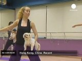 yoga classes for dogs in Hong Kong - no comment