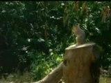 La revanche des ecureuils !!!!!!