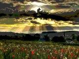 Sen o gün öldün...Şiir ve yorum Nevin Işık