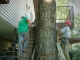 512-779-4171|Austin Tree Service|Austin Tree Removal