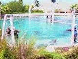 Barcellona - Mi(ami) delfino