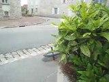 CrazyStreet n°5 + 5ème gamèle du fou et 1ère gamèle du taxi !