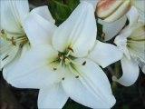 florent chante hélène segara