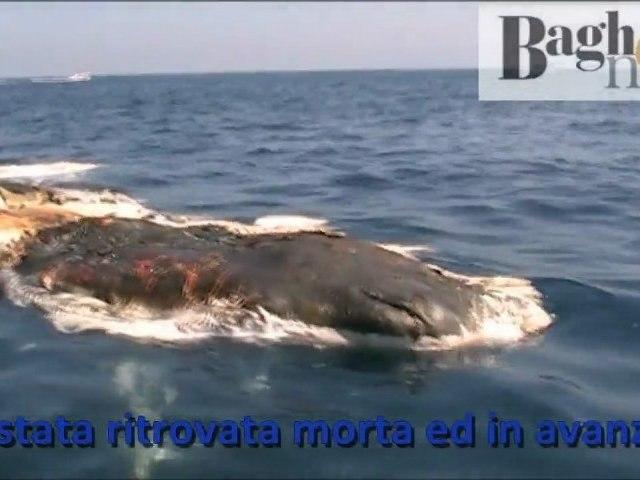 La balena trovata morta al largo di Porticello