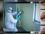 Removing mold in your home