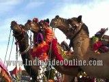 Decorated camel06, Camel festival