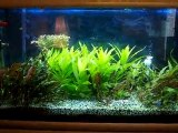 Mon aquarium 200 litres