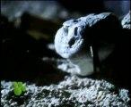 Las Serpientes (El Maravilloso Mundo de los Animales de Disney)