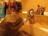 Le chat Mo, le chat d'eau