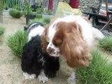 Mes petits coeurs dans le jardin !