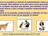 Como adiestrar a un perro - como educar al perro - educacion para perros