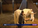 France 3, reportage du 20/08/11 sur les FOLIES CHEVAL avec Wilfride Piollet et Jean Guizerix et les chevaux danseurs