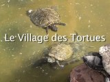 Le village des Tortues, Reportage MAG