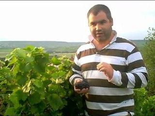 Profil de la vendange 2011 en Champagne