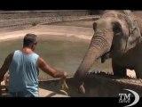 Zoo di Napoli, contro il caldo piscina e frutta per gli animali. Gli anziani entrano gratuitamente nei giardini