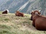 MOV05606 Le bon lait des Alpes .