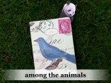 among the animals - blog