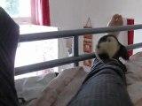 Sortie des rats de Sauvetage Septembre 2011 vidéo 4