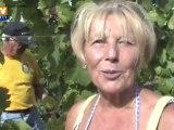 Vendanges précoces dans les vignobles d'Alsace