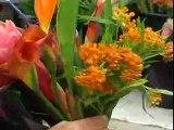 Le Nord et le Sud dans un bouquet de fleurs avec Aquarelle