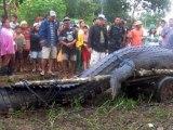 L'arrestation d'un crocodile-tueur d'une tonne