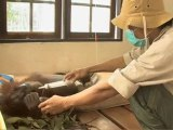 CINEMA - REPORTAGE ENVIRONNEMENTAL - Green - Le dernier jour d'un Orang-Outang - Documentaire