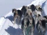 Groenland: Les derniers chasseurs de l'Arctique (Part.2) Voyage avec les chasseurs