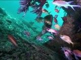 Les Caraïbes - Epaves et récifs