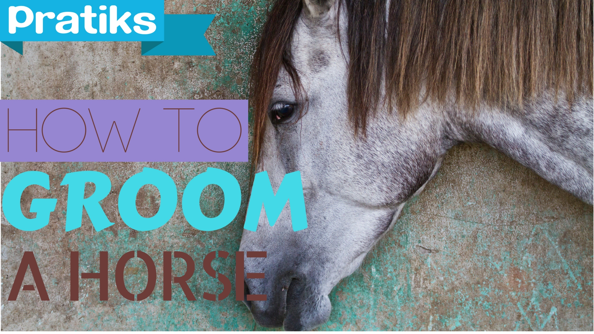 Horse Riding – How to groom a horse