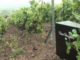 Champagner-Mythos: Gibt es einen neuen Jahrgang Dom Pérignon?