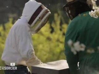 C'est pas sorcier - le déclin des abeilles