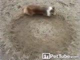 Dog Makes Circles, Circles, and More Circles