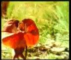 Allah a crée le joli monde de plantes et d'animaux