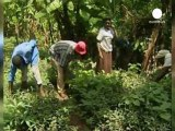 Muerte la ecologista keniana Wangari Maathai, Premio...