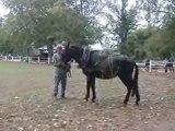 présentation de chevaux de traie au salon du cheval au haras de rodez !!!
