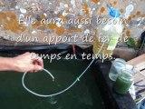 Récolte de spiruline dans un petit bassin de 300 litres