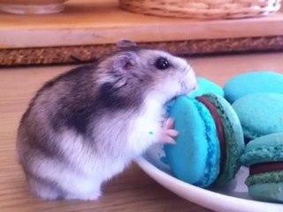 Tout le monde aime les macarons!