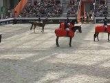 Une cérémonie agitée - Saut Hermès - Equidia