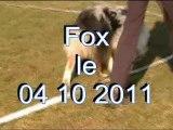 Fox entraînement cavage à Villeneuve d'Aveyron