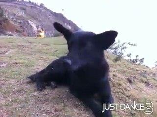 Autodance: my dog de Just Dance 3