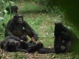 PLANETE MUTANTE - AFRIQUE DES GRANDS LACS