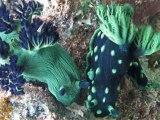 Faune des fonds coralliens
