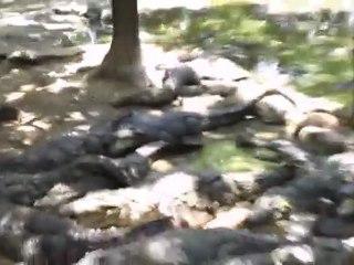 Crocodile Park,Chennai