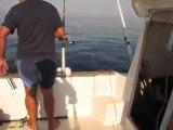 pêche a la bonite septembre