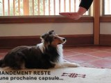 Commandement Combinaison - obéissance chien