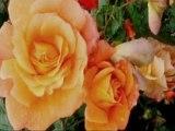 Jesienne róże-Krzysztof Krawczyk