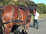 """""""Parité"""", un véhicule hippomobile pour le transport des personnes à mobilité réduite"""